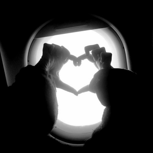 planeheart